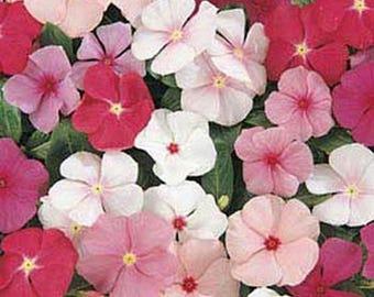 Vinca- Periwinkle- Mix Colors- 50 Seeds