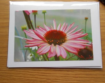 Flower Greeting Card, Photo Greeting Card, Floral Note Cards, Photo Note Cards, Birthday Card, Greeting Cards, Note Cards