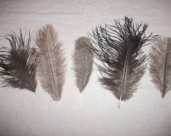 Lot 10 10 to 20 cm lot 6 ostrich feathers