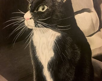 Black and White Cat - Colored Pencil