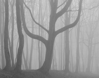 Fine Art, Tree Art, Nature Photo Print, Fog Photography, Black and White Photography, Poetry in Photography
