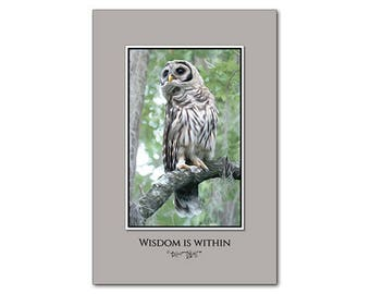Owl Poster - Barred Owl Picture - 12 x 18