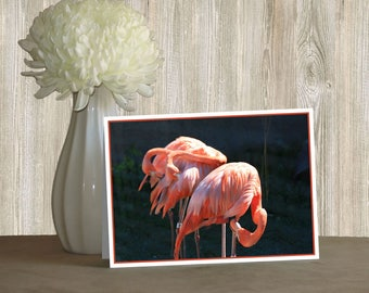 Fine Art Note Card - Flamingos