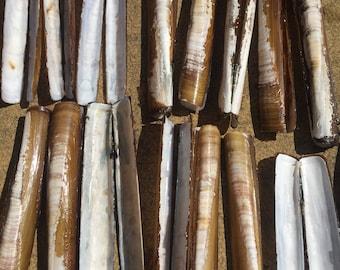 33 Razor clams, wind chime, nautical