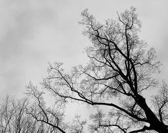 Digital Download Photography - Winter Landscape (Series 6)