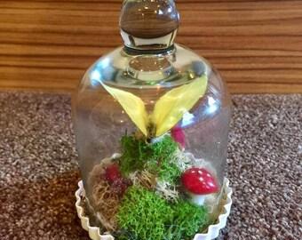 Butterfly bell jar