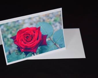 blank greeting card red rose