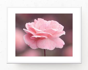 Pink Rose Photo Download, Pink Room Decor, Pink Photograph, Pink Printable, Pink Art Print, Pink Bedroom Wall Art, Printable Art, Download
