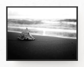 Black and White Seashell Print - Seashell Photograph, Digital Download, Beach Wall Art, Seashell Art Print, Printable Art, Black and White