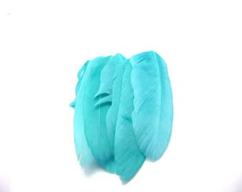 6 blue turquoise feathers around 7 cms