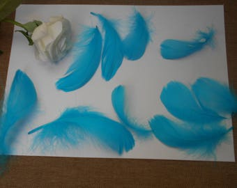 10 feathers - turquoise d ' about 8cm