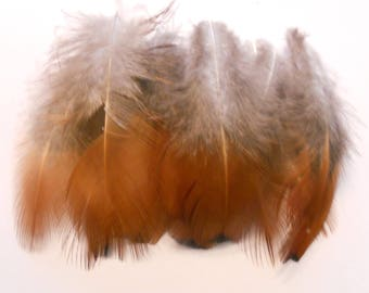 Set of 10 natural feathers of pheasant 9 cm