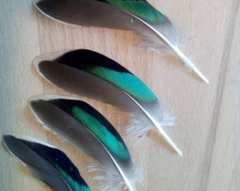 "x 7 (t.) (L) * unique batch * large peacock feathers ""green wings"" iridescent Green"