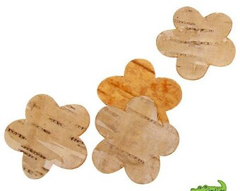 Set of 10 beautiful real wood (birch) 3 cm, embellishment natural flowers!