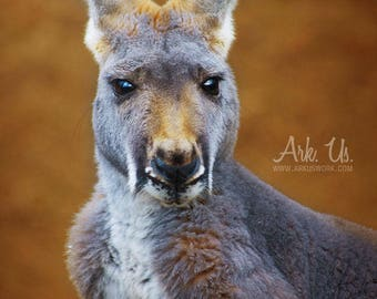 Portrait poster of a kangaroo on gold orange