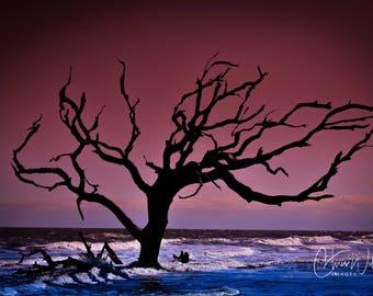 One Tree Beach