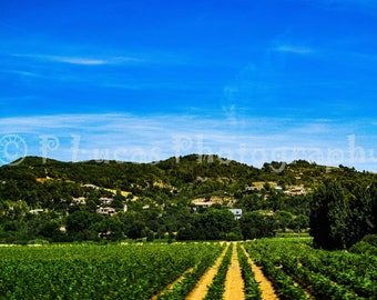 Vinyard South of France