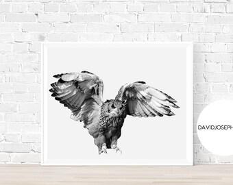 Flying Owl Print, Owl Wall Art, Animal Photography, Modern Minimalist, Owl Decor, Owl Poster, Nursery Print, Owl Photo, Digital Download