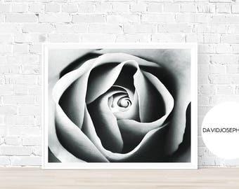 Rose Print, Flower Wall Art, Black and White, Nature Photography, Modern Minimalist, Rose Petals, Botanical Wall Art, Rose Poster