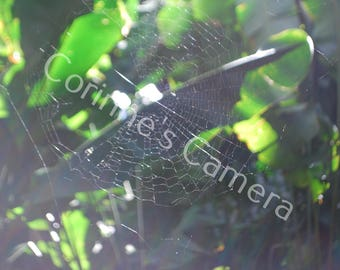 Spiderweb blank greeting card