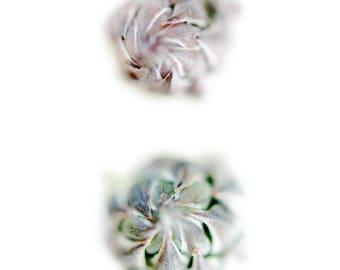 Asparagus, photographic print