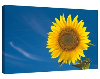 Sunflower Blue Sky Canvas Wall Art Print