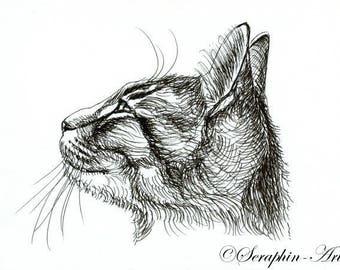 Kitten Original Ink Drawing