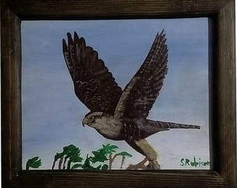 Aplomado Falcon with frame