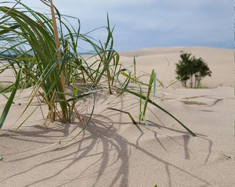 Sand Dunes MI photoset - digital download