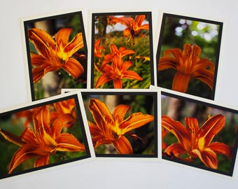 Daylilly Greeting Cards
