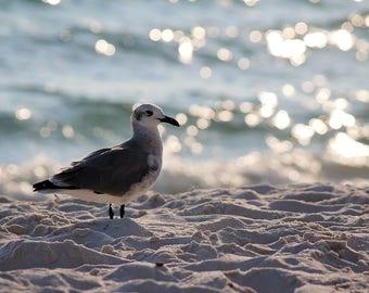 Seagull by the Ocean, beach, sand, bird, Florida wildlife