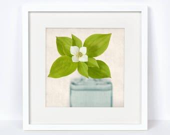 Flower Photography, Botanical Print, Fine Art Photograph, Spring Flower Photo, Botanical Wall Art, Shabby Chic, Bunchberry Flower