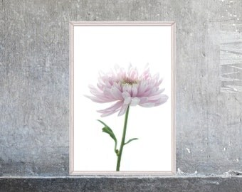 Printable Pink Daisy, Flower Poster, Large Wall Art,  Blush Pink French CountryDecor, Bedroom Art,  Flower Photography Download