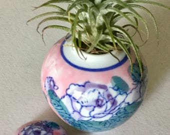 Tillandsia Ionatha Mexican Select Purple Flowering Air Plant In a Ceramic Pink and Blue Planter, 4 Inches