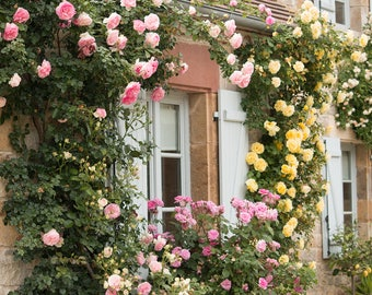 France Photography, Summer Living in the South of France, Martel, Summer, Roses, Nature, French Garden, Bathroom Art, French Wall Art