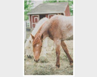 horse photograph, barn photograph, horse wall decor, animal print, horse nursery wall art, playroom decor, rustic animal photo, horse farm