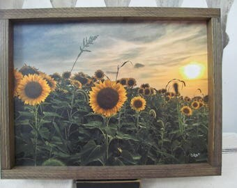 Sunflowers,Sunflower Wall Decor,Fall Wall Decor,13x17,Donnie Quillen