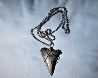 Large  Extinct  MAKO shark tooth necklace.