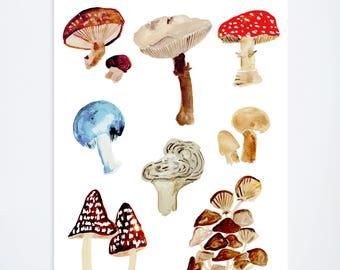 Mushroom Study -  Art Print  - 11 x 14  - Illustration - Art Print