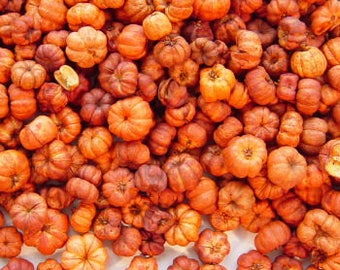 2 Cups Orange Putka Pods Mini Pumpkin Fixins Potpourri Candles Crafts Naturals Primitive Lodge