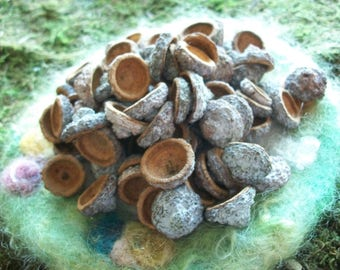 Eucalyptus Seed Caps, Acorn, Supply, Natural, 100 count