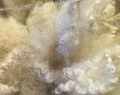 Shetland Icelandic Cross Raw Fleece 4 or 6 oz White Unwashed Fleece