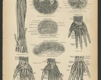 5 Vintage 1880 Human Anatomy Lithograph Print Arm, Hands, Bones, Muscles, Arteries, Veins, Nerves