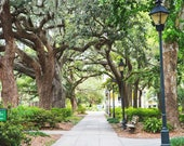 Tree Print, Tree Photography, Forsyth Park, Savannah Georgia Art, Avenue of Oaks, Savannah Art Fine Art Photography, Oak tree, spanish moss