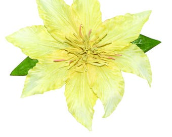 Pretty Yellow Pin Up Clematis Hair Flower Clip