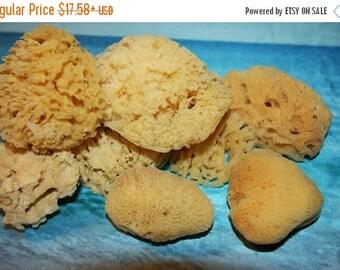 """15% OFF Natural Sea Sponge, Free Shipping, 2"""" - 4"""" Sea Sponges, Sponge Crafts, Sponge Painting, Sponge Sea Decor, Vase Fillers,Sponge ,SP-1"""