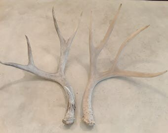 2 natural real deer antler sheds design decor crafts art centerpiece gift rustic natural antler sheds lamp display