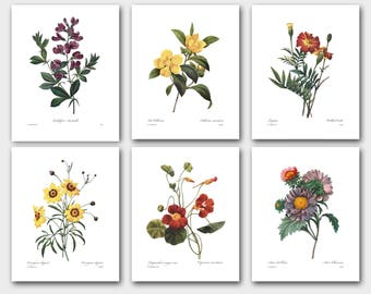 Flower Prints Wall Art, Autumn Wall Decor (Set of 6 Botanical Print Set) -- Marigold, Sweet Pea, Asters, Daisy and more -- SALE
