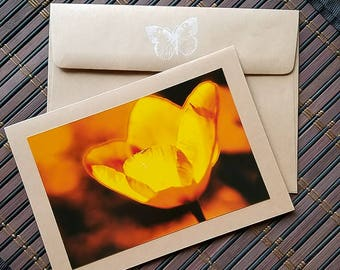Blank Photo card Orange Tulip High resolution