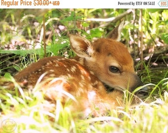 ON SALE Deer Photography, Fawn Print, Whitetail Deer Nature Print, Fawn In The Woods, Nature Art, Little Baby Deer, Forest Babe